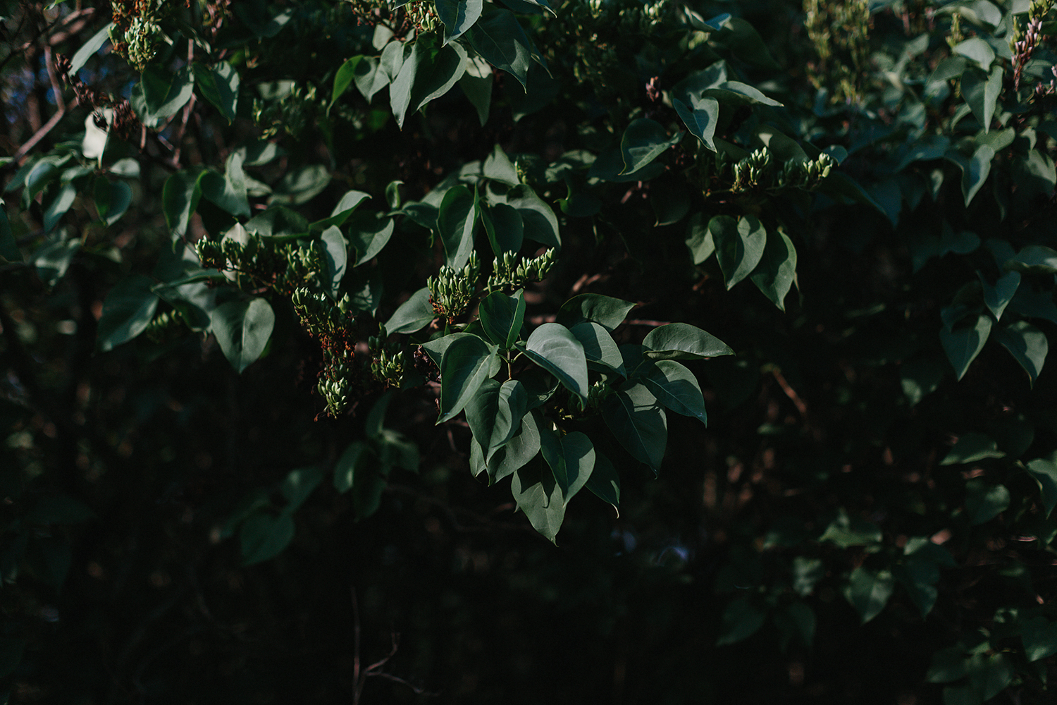 cambium-farms-wedding-ryanne-hollies-photography-gay-wedding-lgbtq-trendy-cool-badass-junebug-weddings-inspiration-cocktail-hour--candid-documentary-moments-farm-sunset-large-trees-leaves.jpg