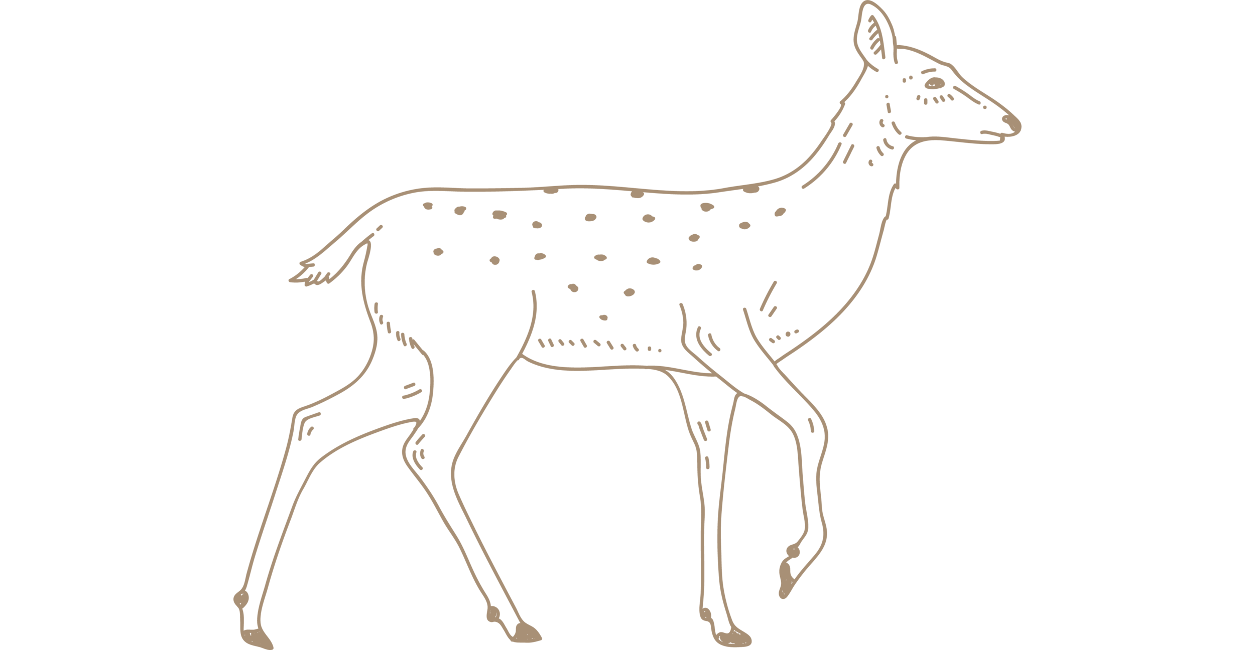 brown-deer-blog.png
