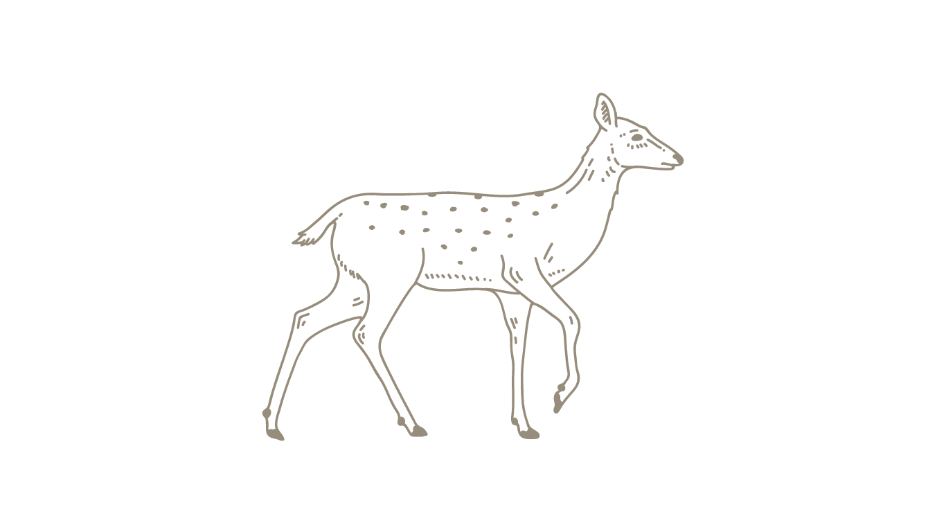 brown-deer.png