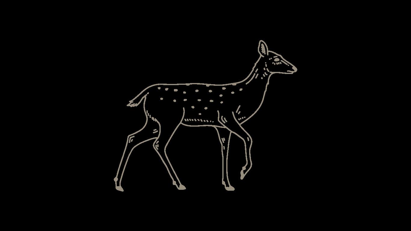 brown-deer.png