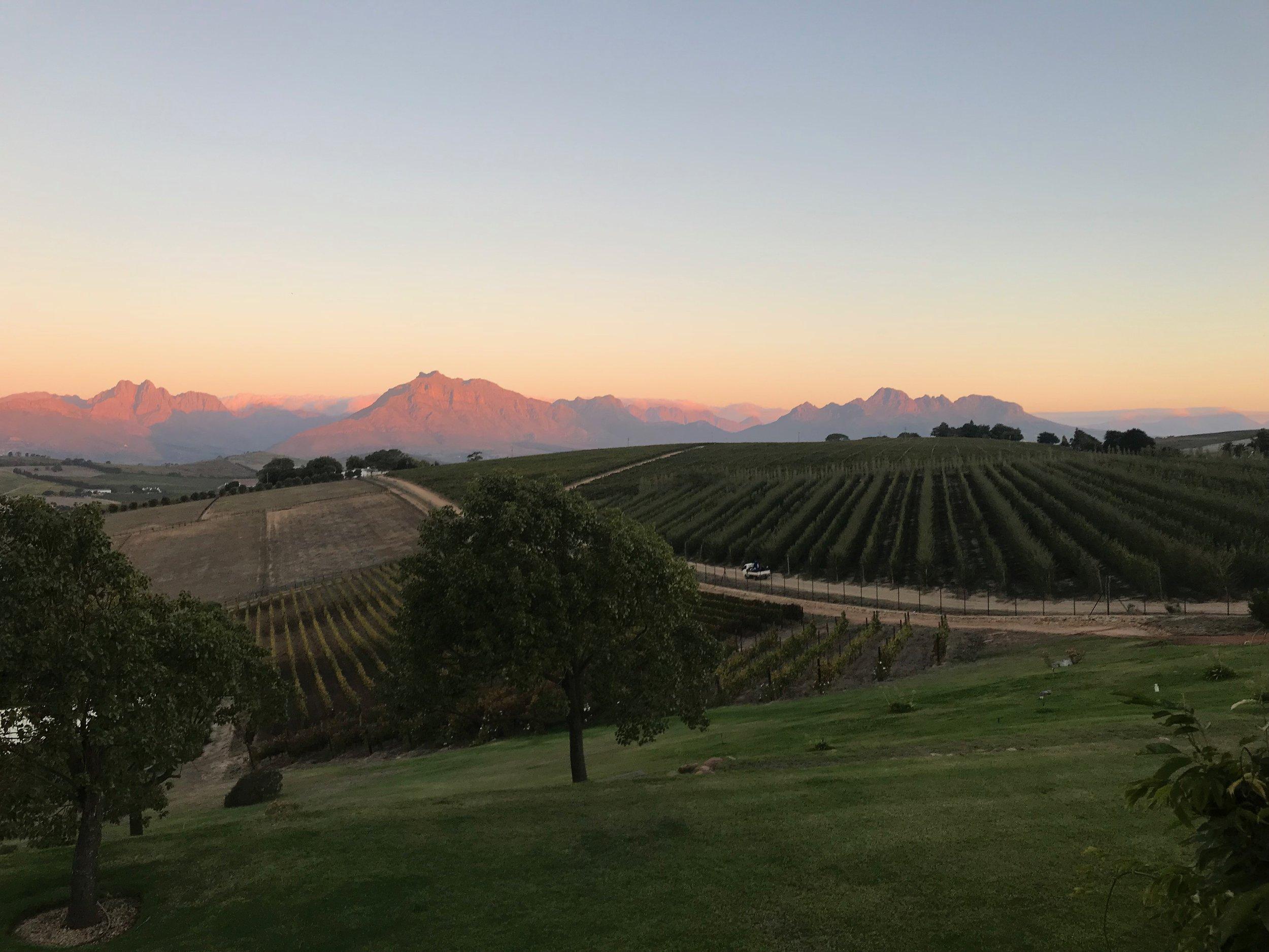 A glimpse of the stunning winelands in Stellenbosch.