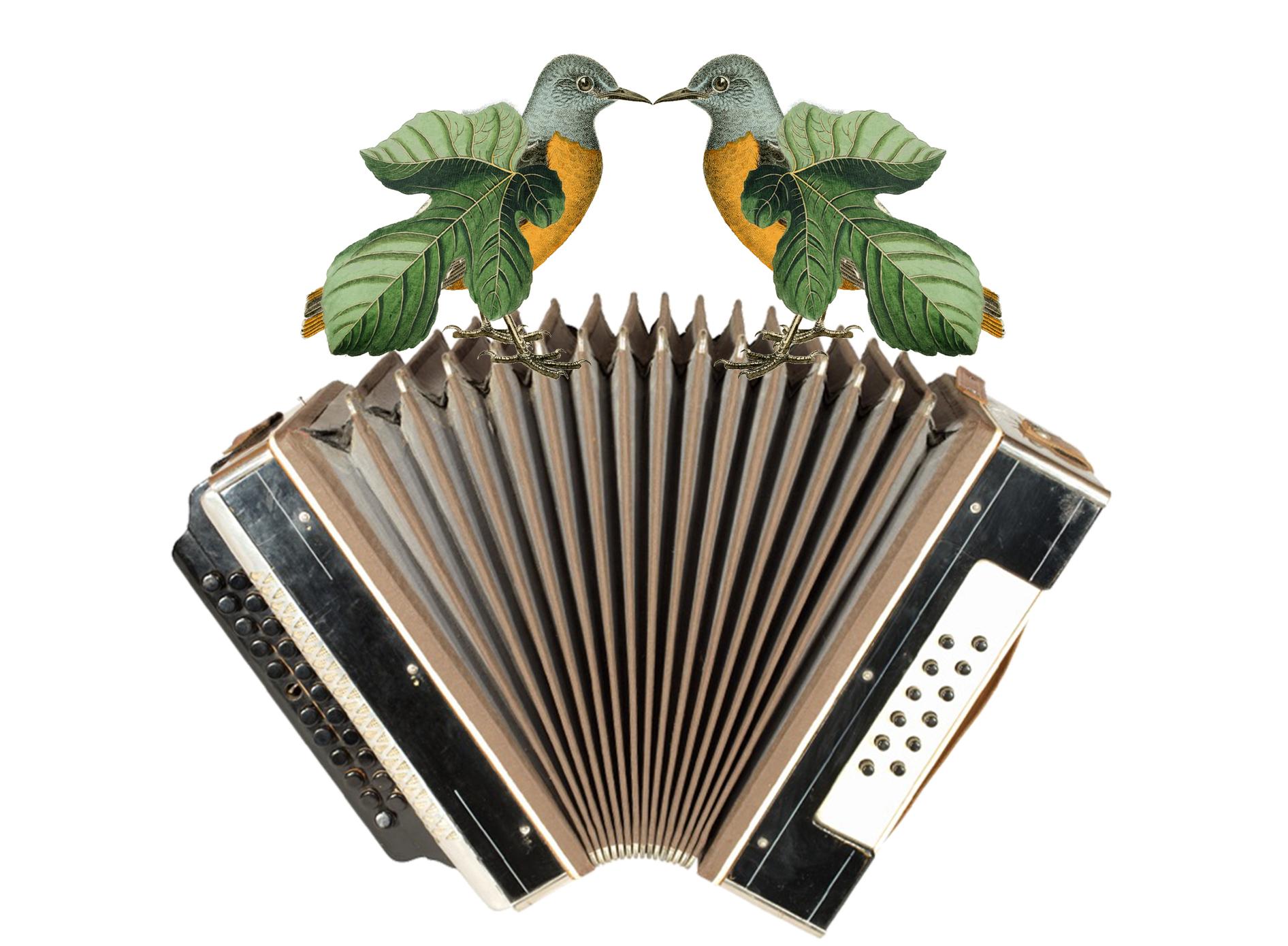 birds_accordion.jpg