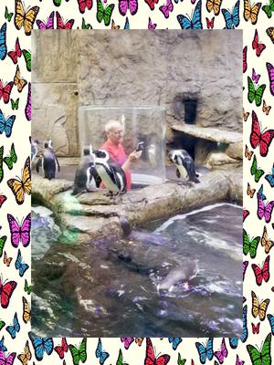 aquarium-tennessee-penguins-cloggers.png