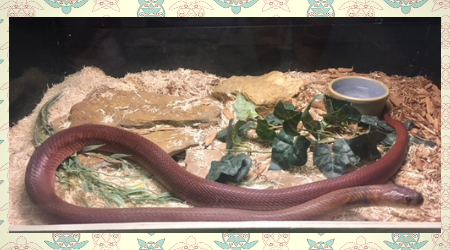Slade-Kentucky-snake-clogging-adventures.png