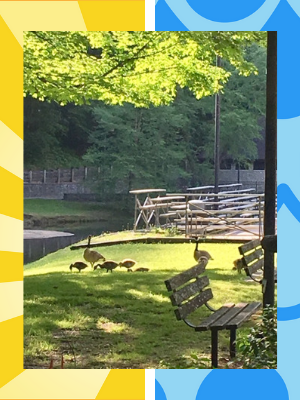 Canadian-geese-on-guard-Hoedown-Island-Kentucky.png