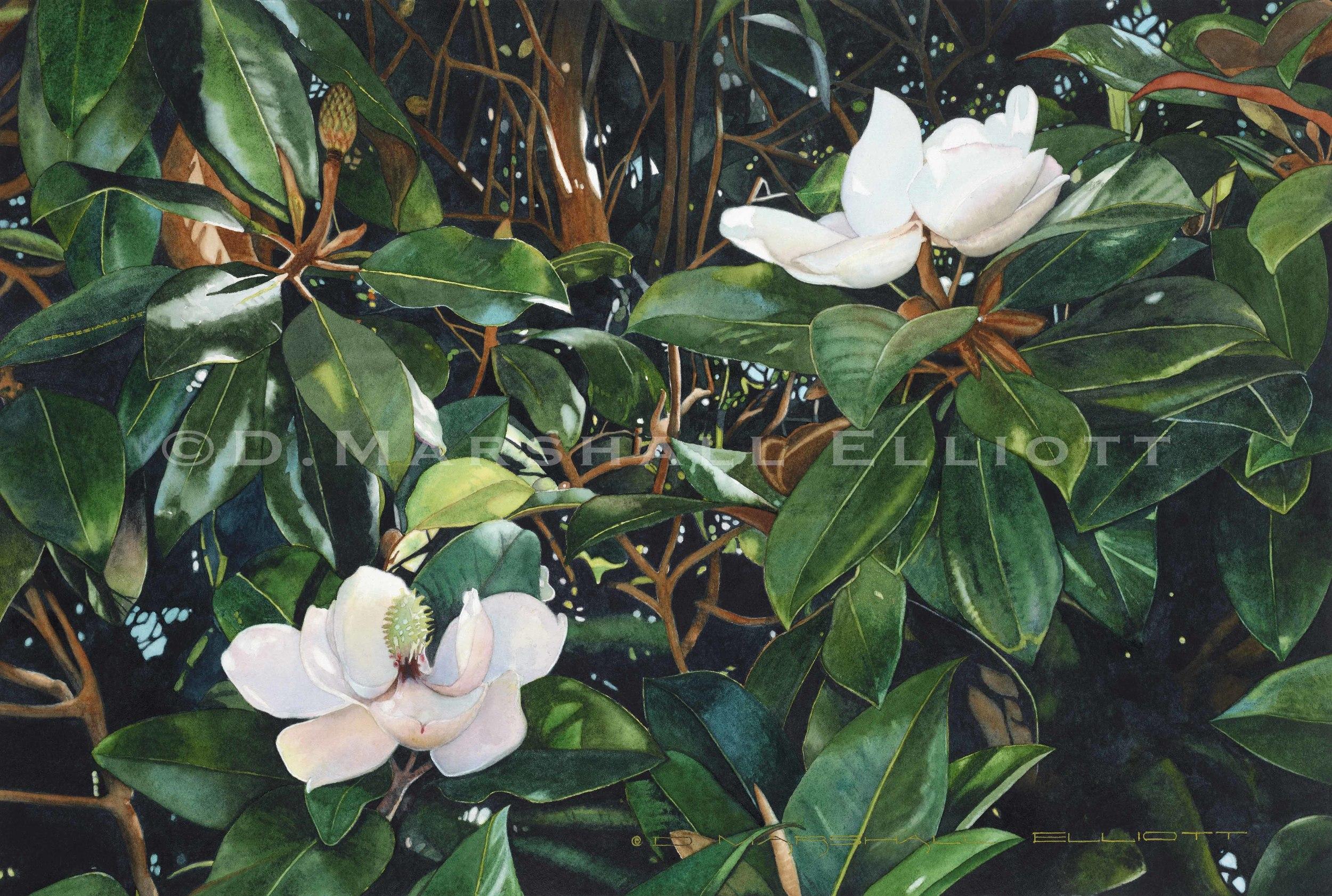 """ Watercolor 19.5 x 13.jpg"