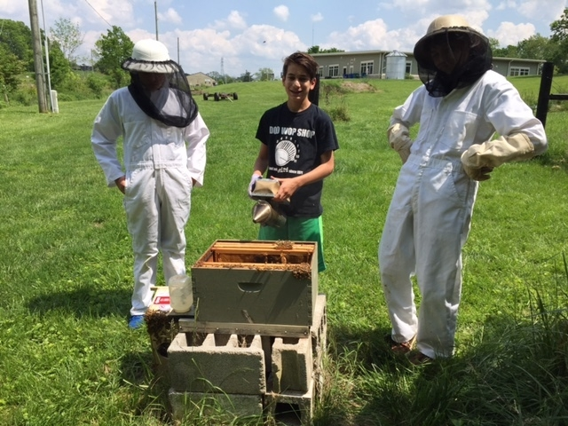 Bee Hives - Bee Hives (c. 2009): At MMSK, students have maintained a globally significant role in restoring key pollinators through care of Italian honeybees in Langstroth hives. Currently we have two full hives – each with around 30,000 workers, drones, and a queen. The students maintain the hives with the help of Dr. Stevenson, and look forward to helping extract honey in late July or early August each year. The honey is bottled and sold as part of the students' Erdkinder Micro-economy.