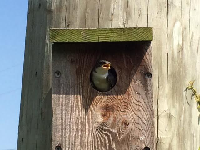 Bird 2.jpg