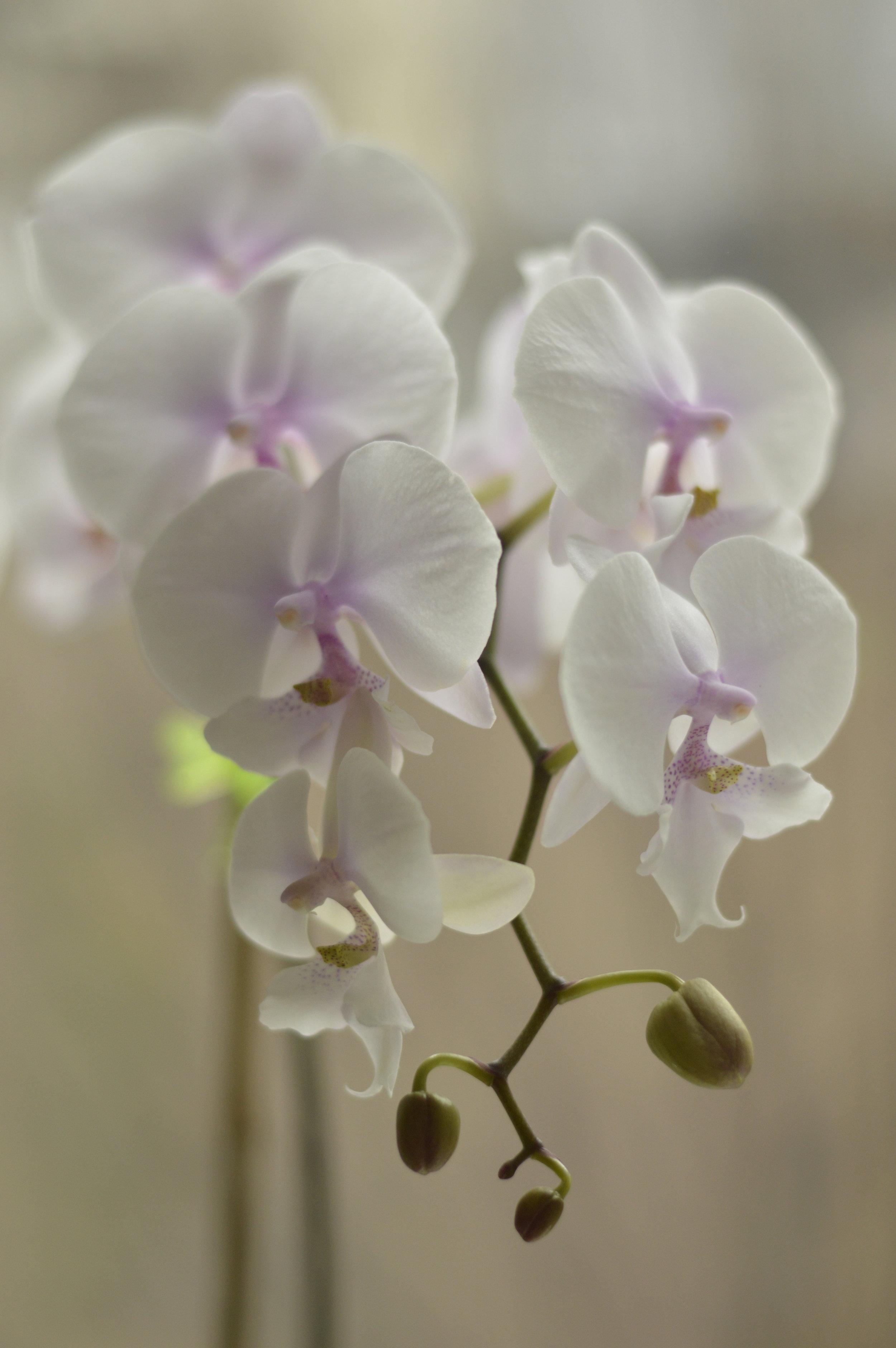 orchid1.jpeg