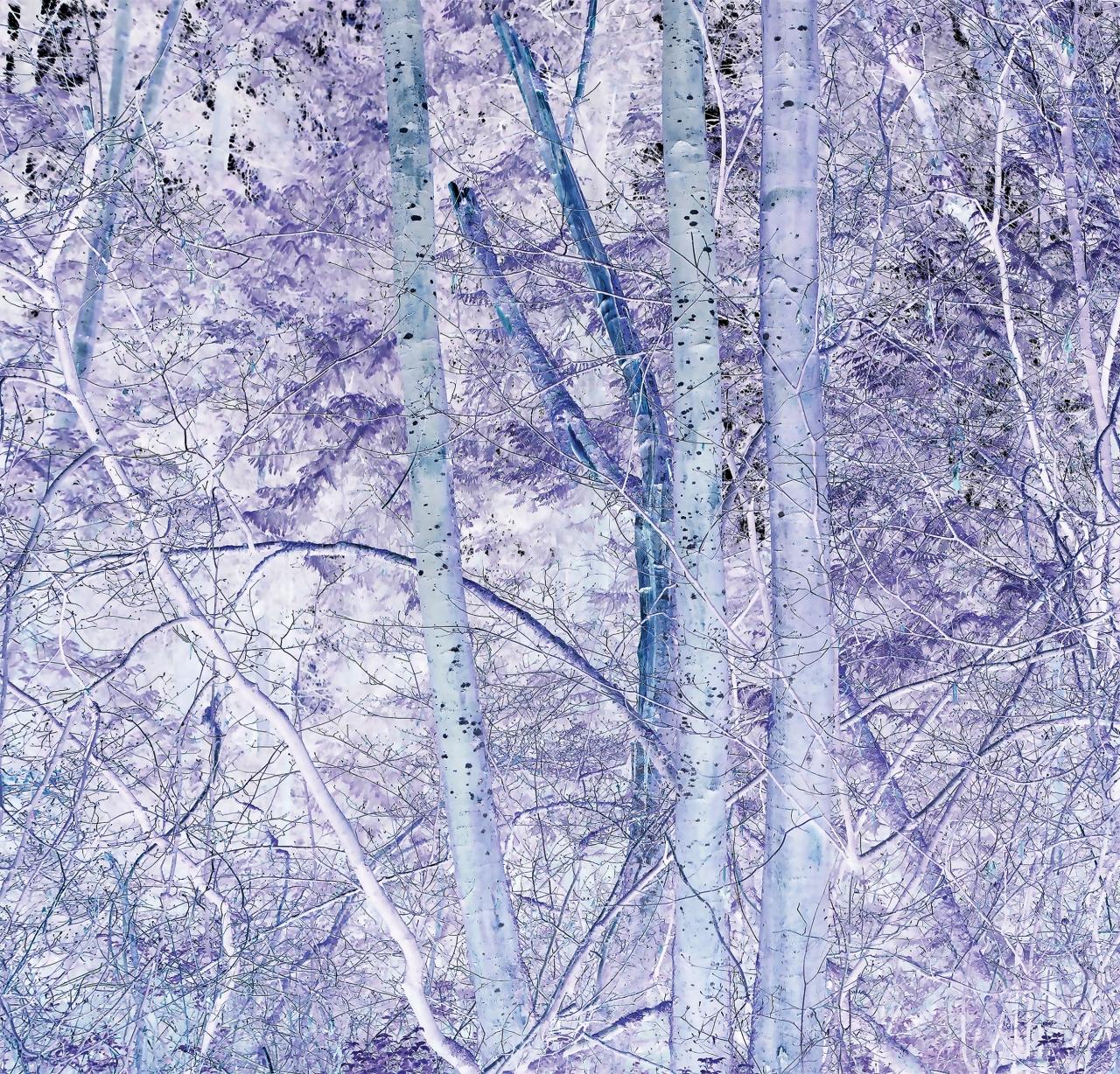 "Hua Jin,  Forest (inverse detail) , 2017. Inkjet print, 30 x 30""."