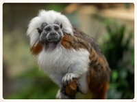 monkeys copy.jpg