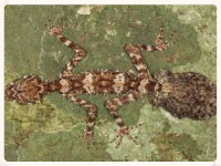 www.wonderofscience.com.au/biology-1/