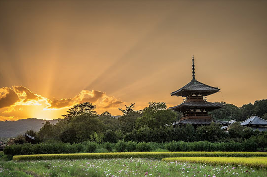 Nara Photographed by Francesco Peril