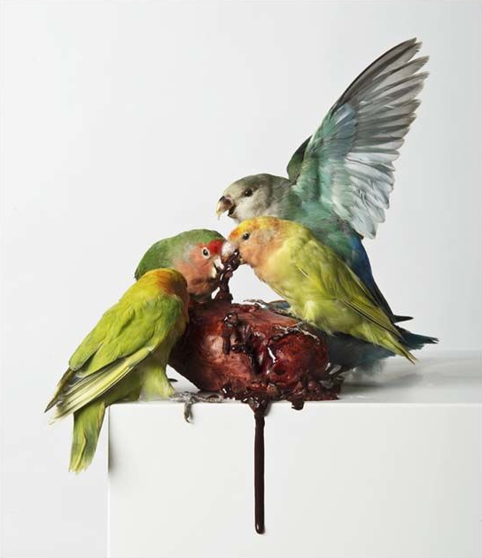 Myocardial Infarction, by  Polly Morgan , 2013  Taxidermy, resin plaster, glue, oil paint, ink 127cm x 38cm x 38cm