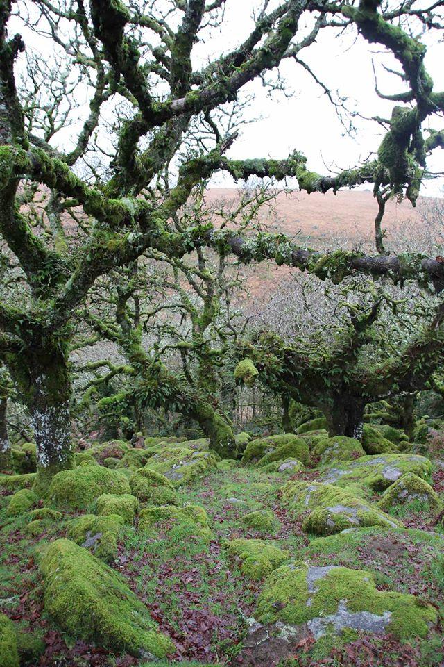 Wistman's Wood in Dartmoor National Park