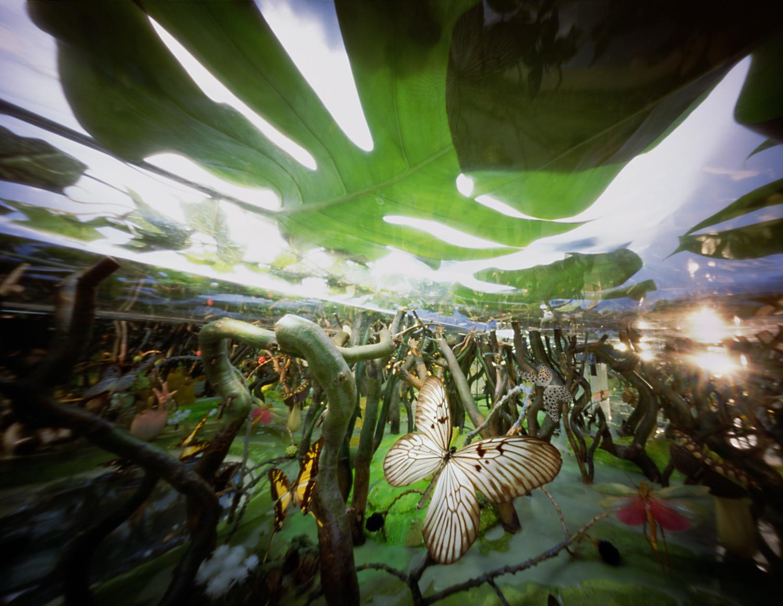 Witte vlinderjungle
