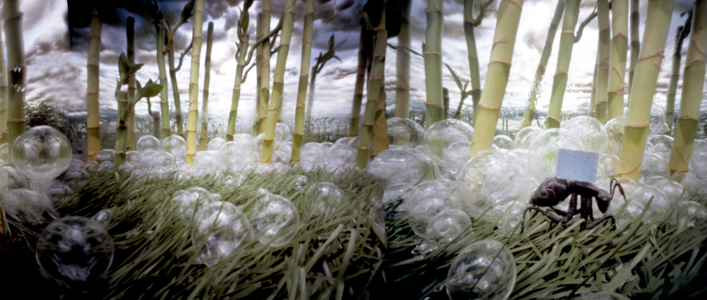 Bamboo mier