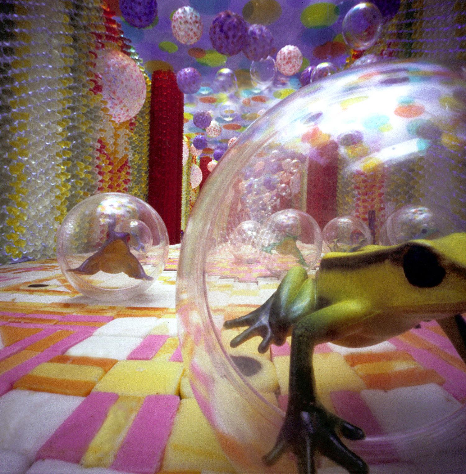 Zeepbellen kikkers