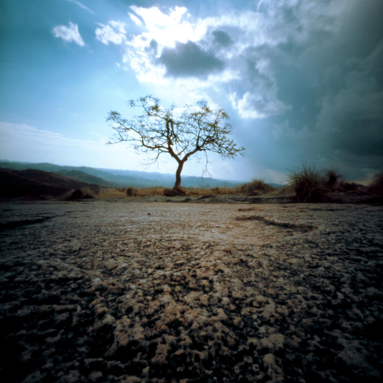 eenzaam boompje.jpg