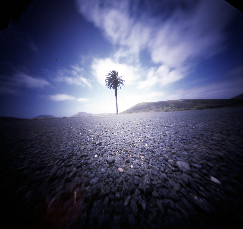 palmboompje.jpg
