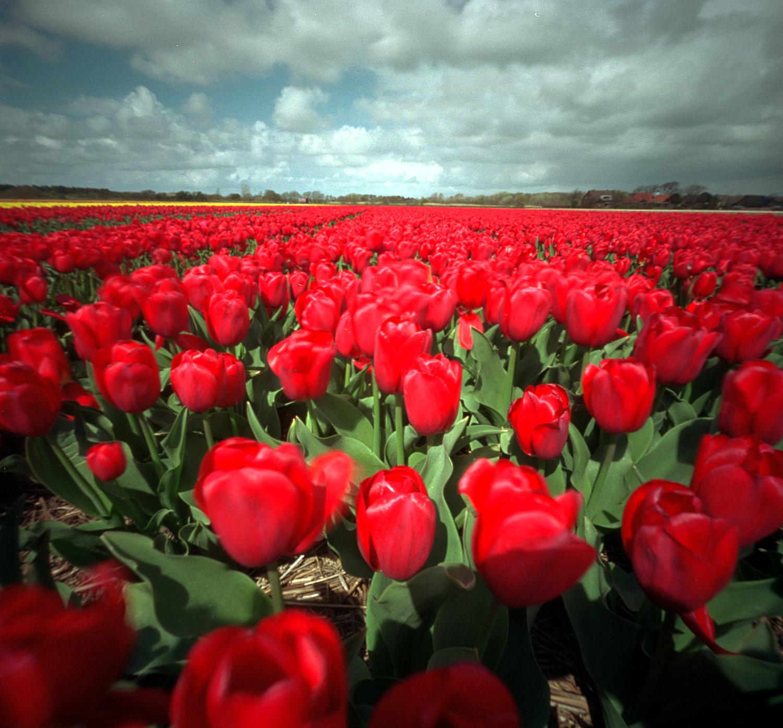 veld rood.jpg