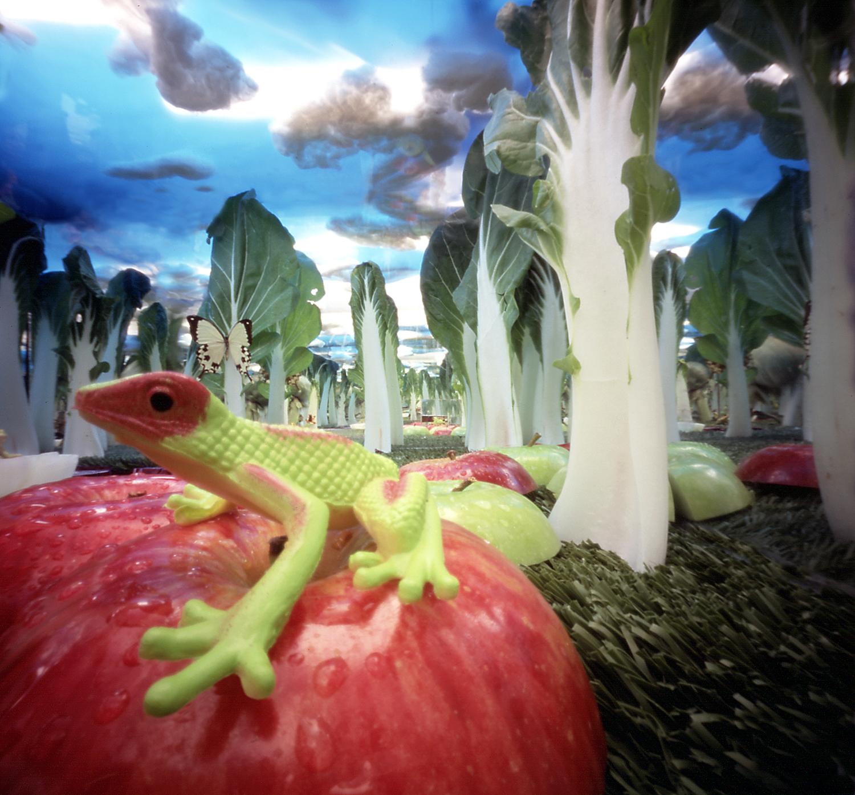 kikker op appel 2.jpg
