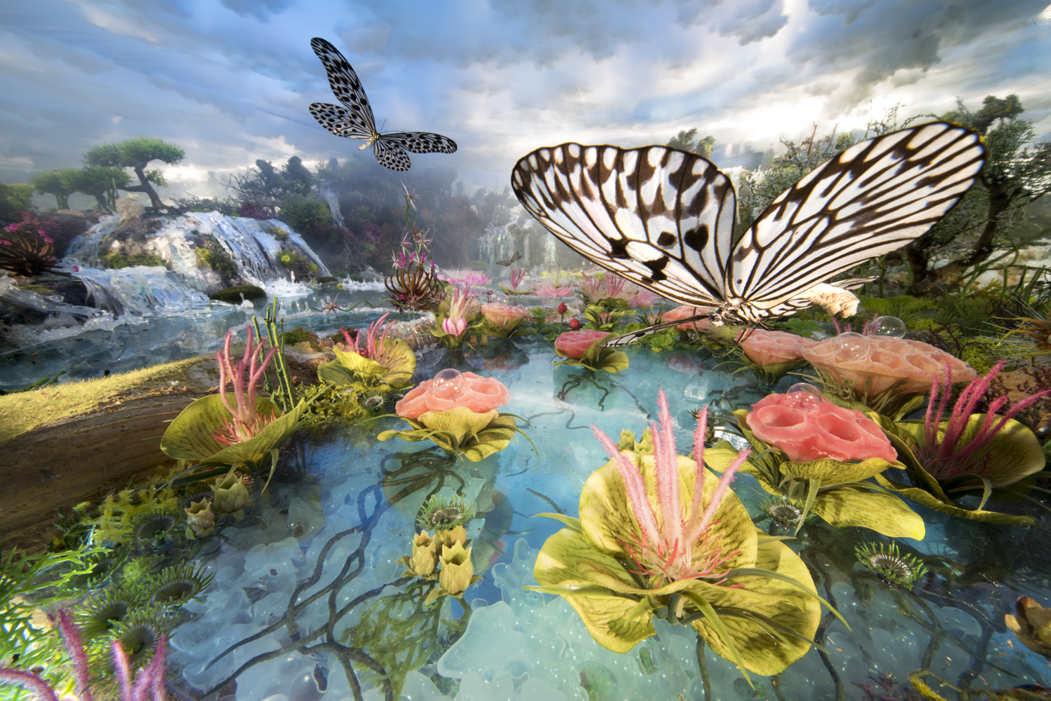 Waterfall butterflies