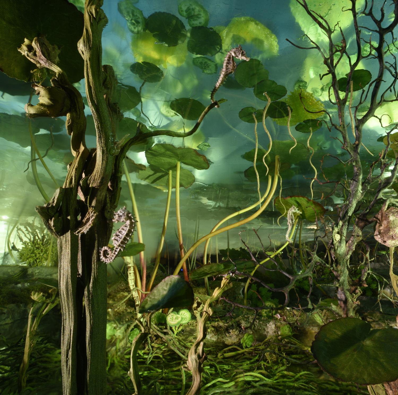 Waterplant Seahorses