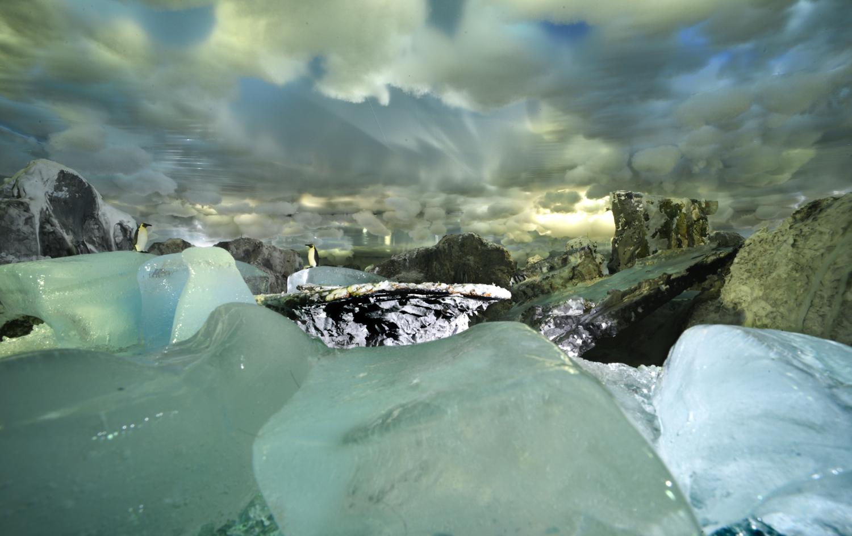25. Ice Pinguins