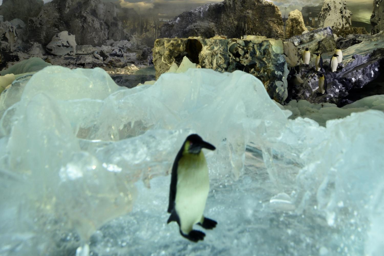 27. Pinguin close