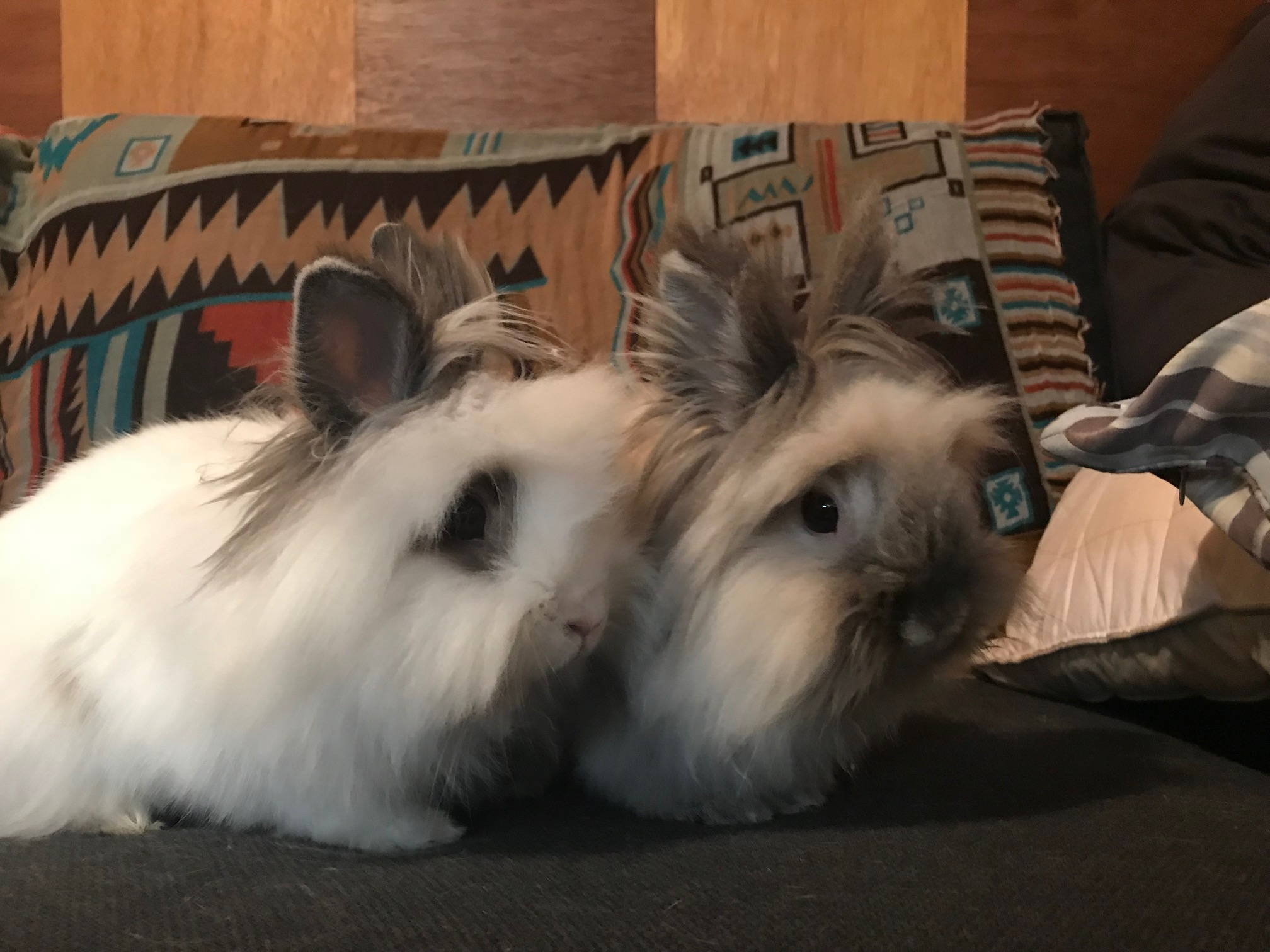 Penelope and Ginger