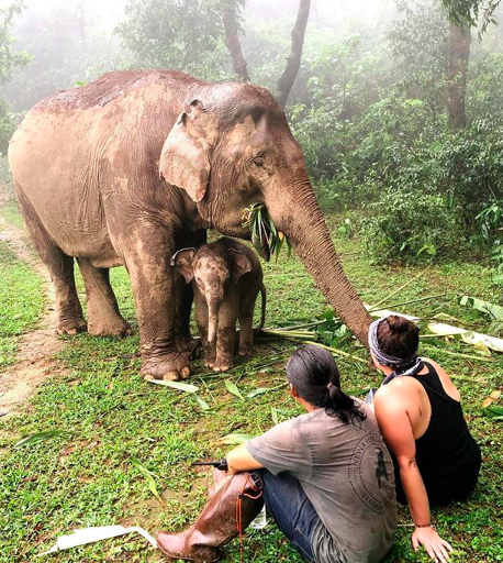 Never Forget Elephant Foundation believes in humankind's potential to be the best stewards in enabling endangered Asian elephants to thrive in a healthy, biodiverse habitat. We believe in compassionately showing up as a global community to support a model of respect and trust with local Karen Hill Tribe people, elephants and each other.