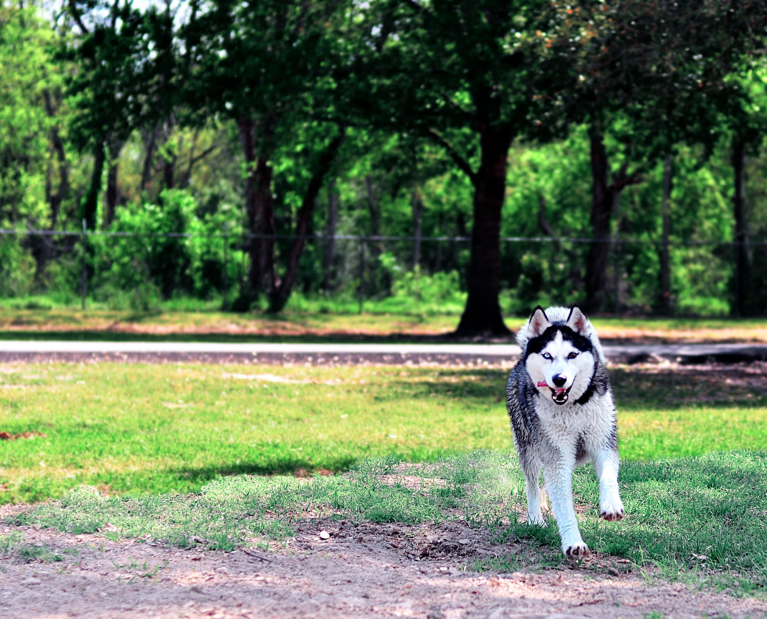 DogPark3.jpg