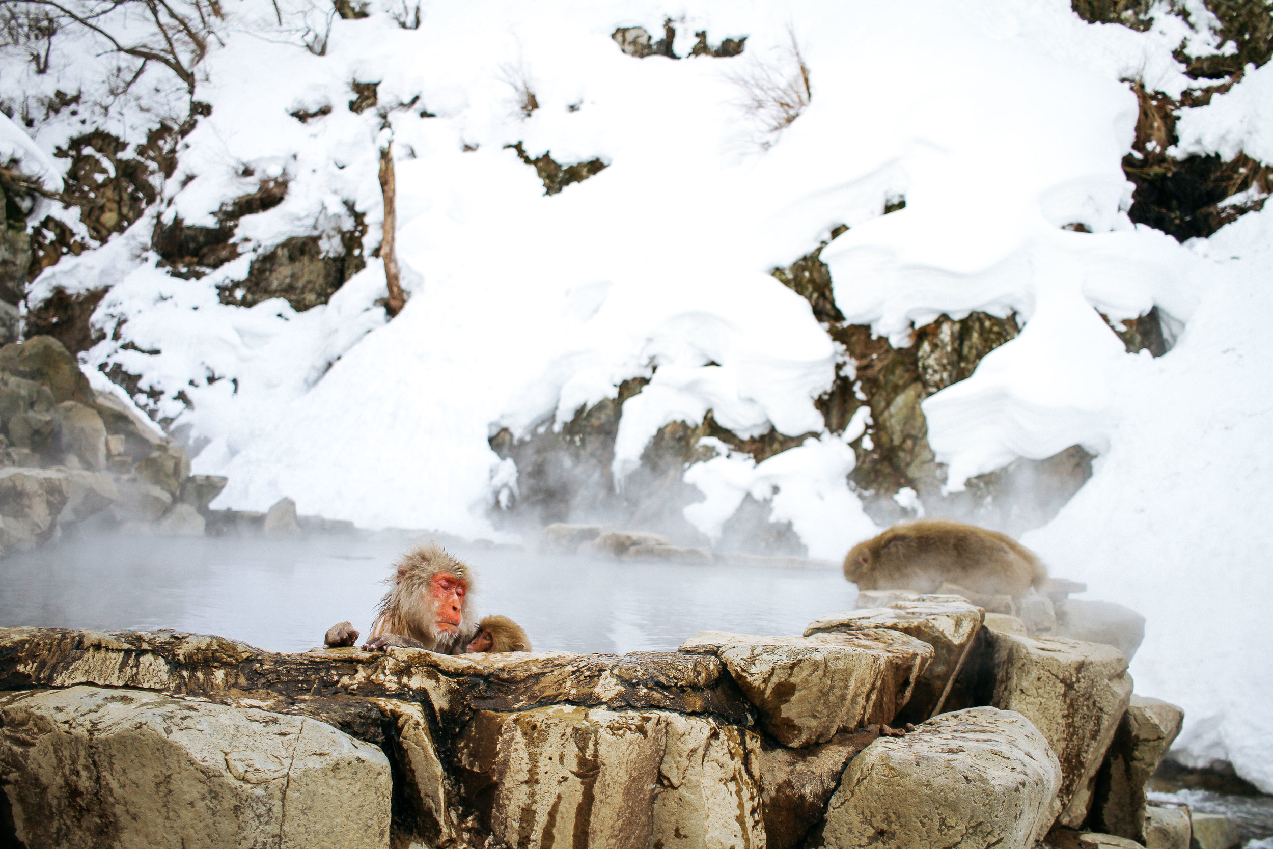 MAMA MONKEY  JIGOKUDANI, NAGANO An iconic place to visit is this monkey onsen in Nagano. I'm sure most of us have seen photos of it in national geographic or some travel website. Seeing it in person was a treat. Growing up in CA, I never got used to the snow, so throw some monkeys bathing in a bath into that frame and I was just in awe the whole time. It's almost as if the monkeys are Japanese themselves, adopting this lifestyle of public bathing with friends and family...haha.