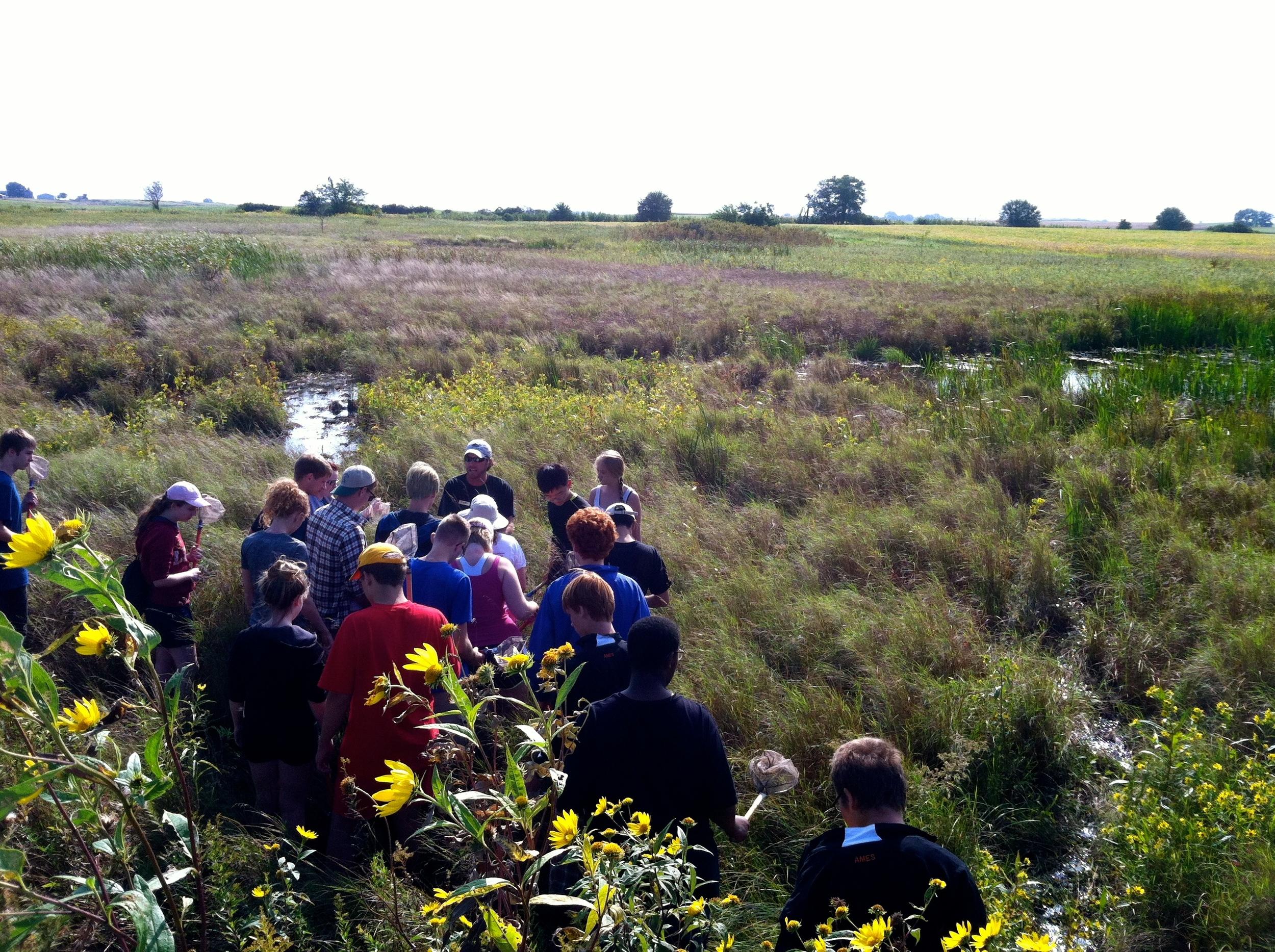 Field Studies: Engeldinger Marsh