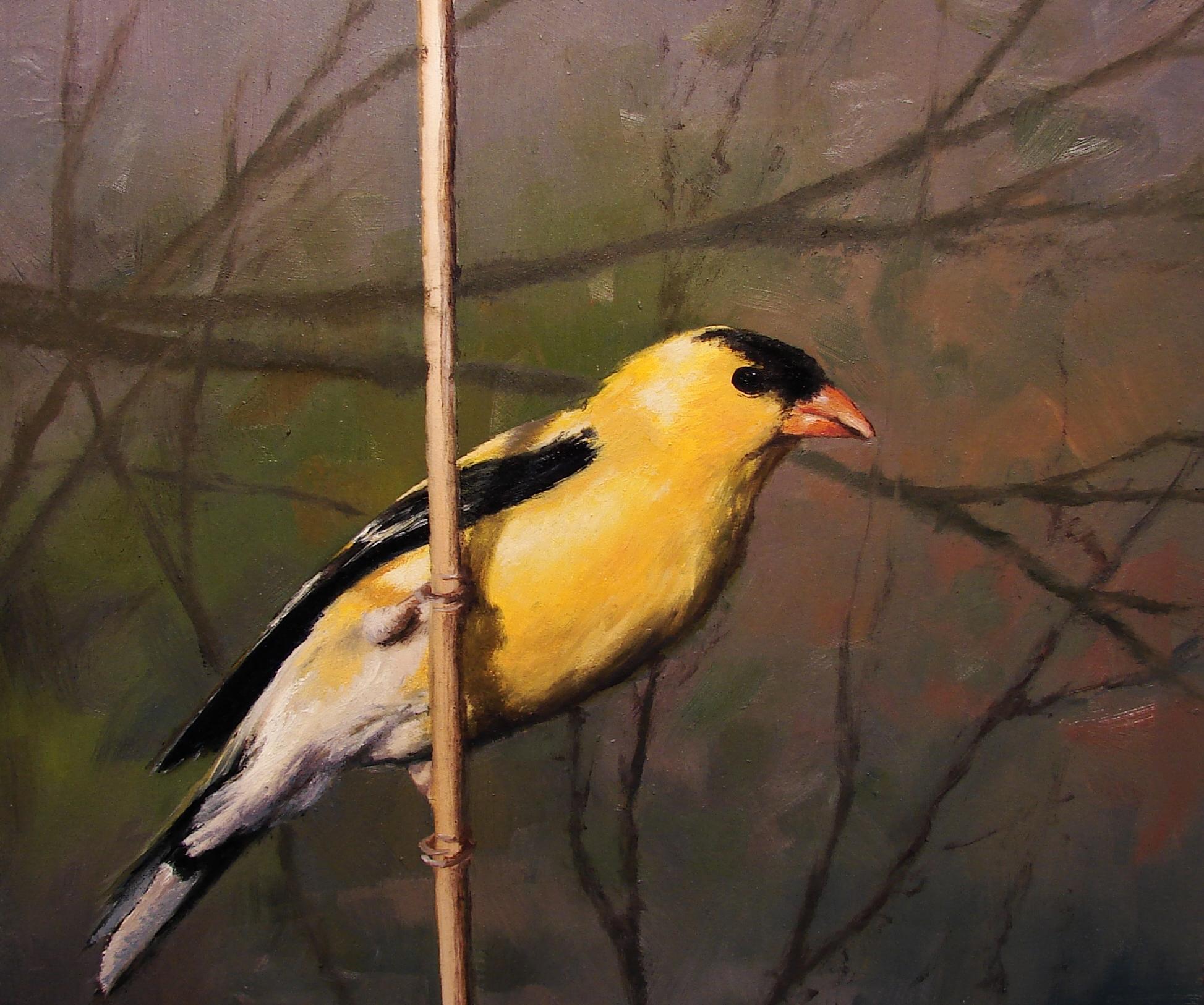 Finch III