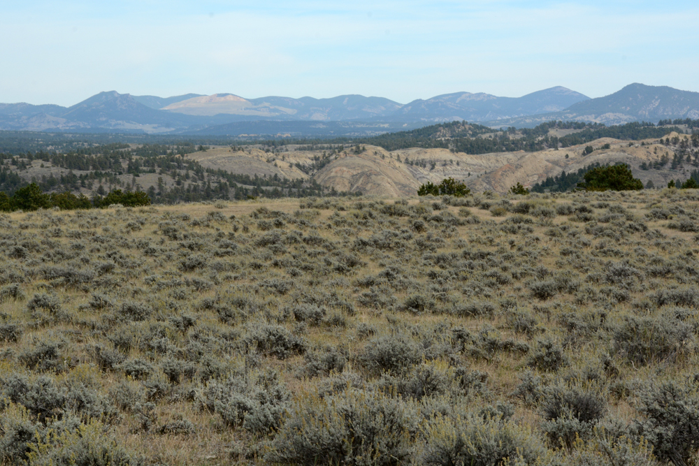 Sagebrush stretches across the Upper Missouri Breaks National Monument, while in the distant mountains, the remains of the disastrous Zortman-Landusky mine can be seen. Photo by Laura Lundquist