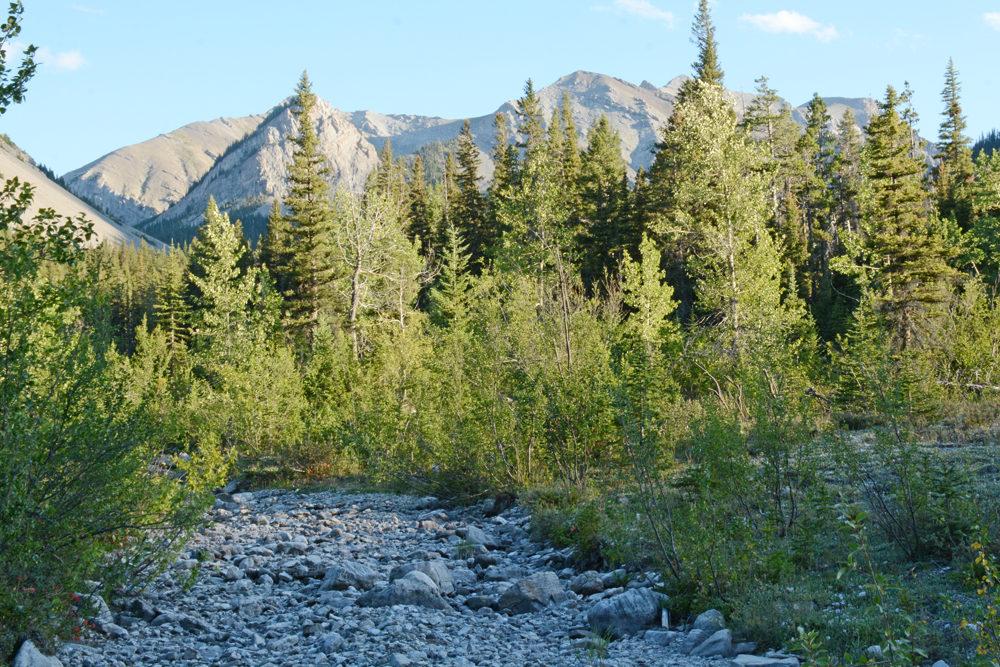 Dry stream on the Rocky Mountain Front in summer 2015. Photo by Laura Lundquist
