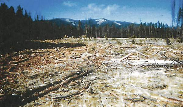 Clearcut near the Moosehorn Ditch in the Beaverhead Deerlodge National Forest.