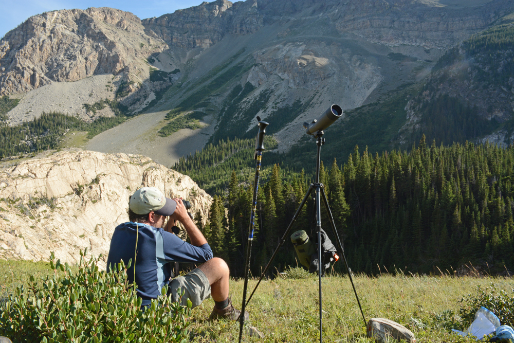 A citizen scientist scans the ridge for mountain goats near Poia Lake in Glacier National Park on Aug. 13.