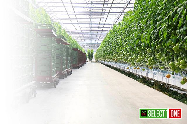 A quick look into one of our state of the art greenhouses 🤩🍅🌱