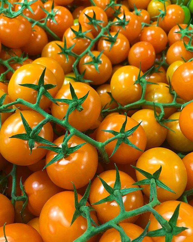 Anybody else wishing they were as photogenic as these orange cocktail tomatoes? 🧡🧡🧡 . #cocktails #cocktailtomatoes #yummy  #tomato #fresh #freshproduce #buylocal #healthyfood #healthylifestyle #fruit #eatgoodfeelgood #vegan #freshlypicked #greenhousegrown #AMCOproduce #SelectOne