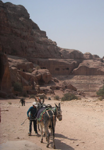 The Donkeys of Petra, Jordan