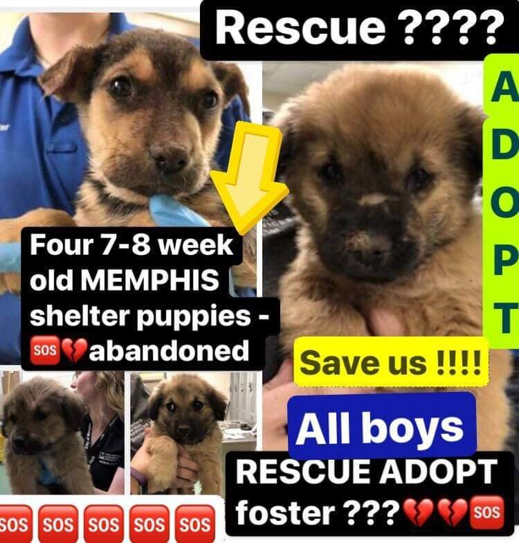 Puppies — Odie's Place Animal Rescue