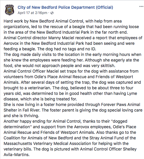 Despite Forever Paws emphatically denying having anything to do with this dog. The New Bedford Police still on that very same day went with the narrative that the shelter was involved . When they were not.