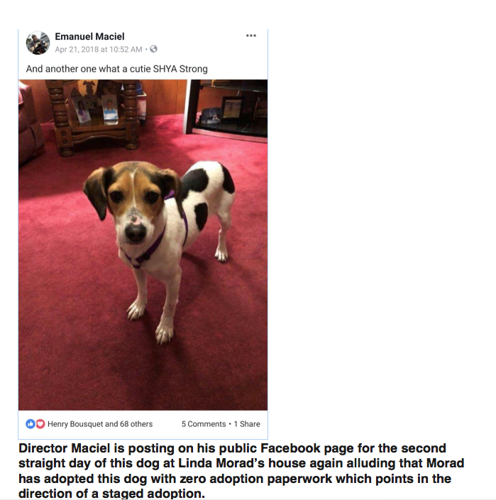 The following day despite zero paperwork from Forever Paws Mr Maciel posts a picture of Jackie in Linda Morad's house essentially announcing an adoption. At Large candidate Steven Martins is happy for Linda.