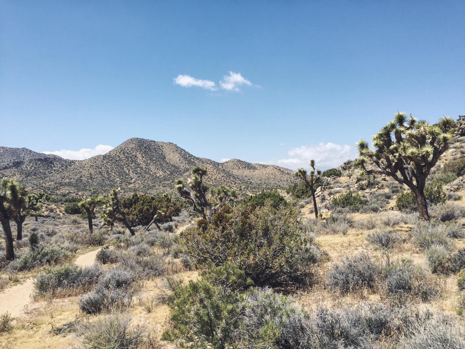 Joshua Tree National Park - the Badn Hill Blog