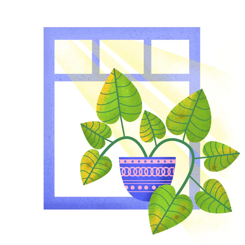 04-yellow-leaves-brown-spots.jpg