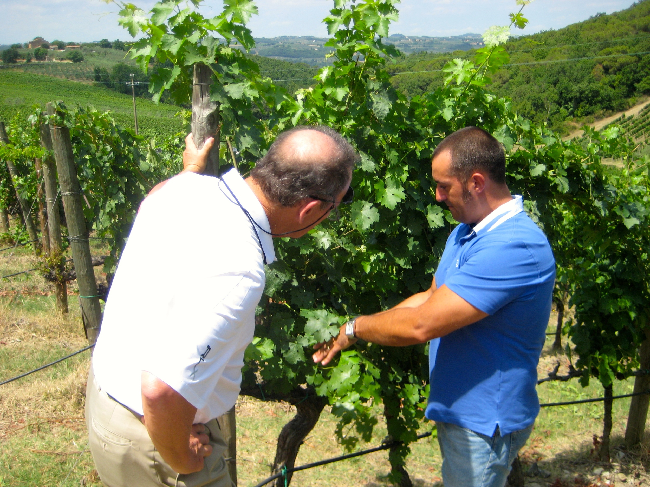 Jeff and Marcello (Antinori's chief vintner) checking for ripeness.