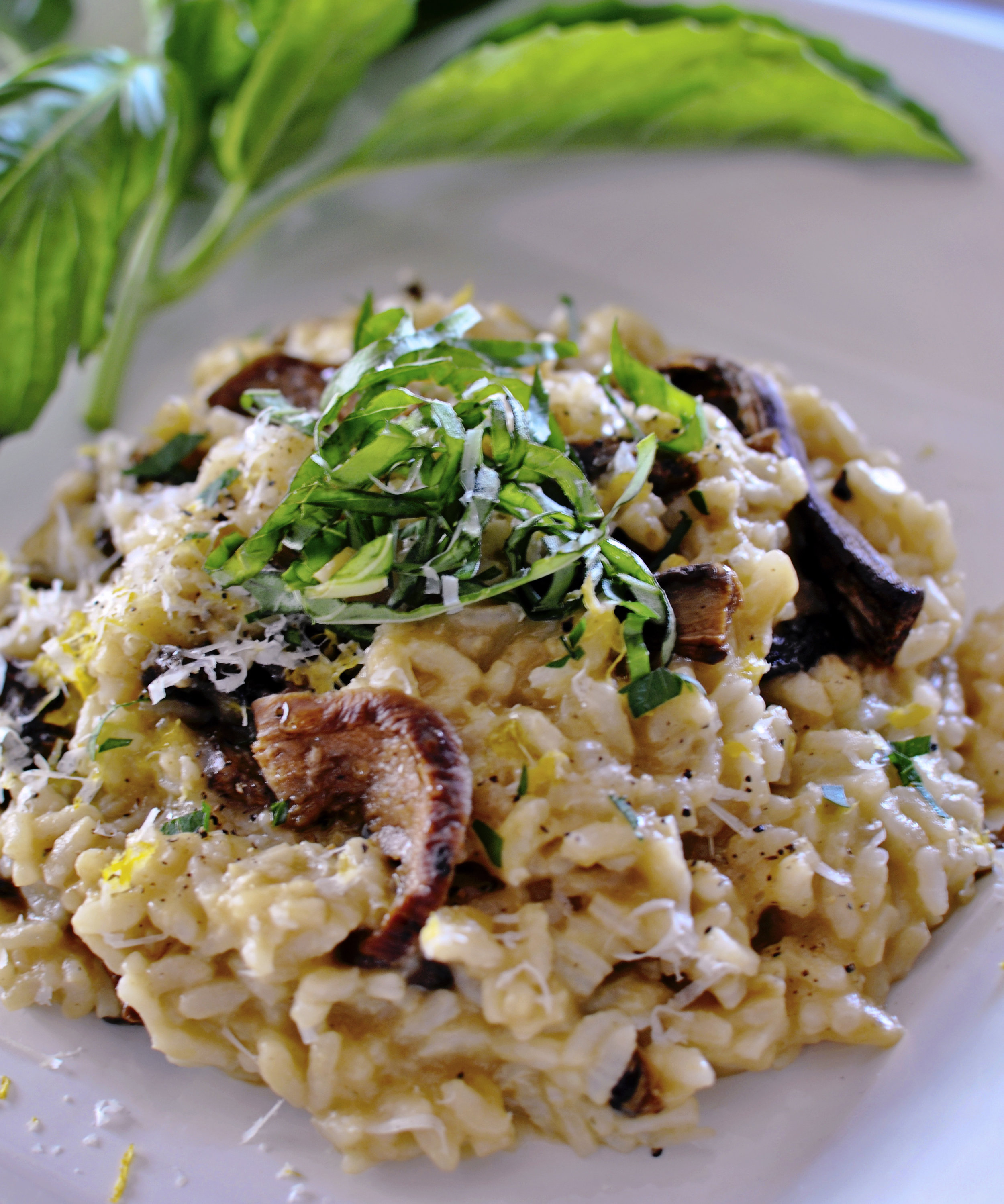 White Truffle Risotto with Porcini Mushroom www.gigiwilson.com/traditional-white-truffle-risotto